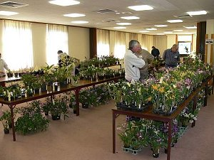 Orchid Sales